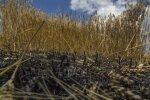 """""""Хлебное перемирие"""" под Мариуполем: шансов мало, но надежда есть"""