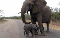 Доклад: за последние 40 лет в мире стало на 60% меньше животных