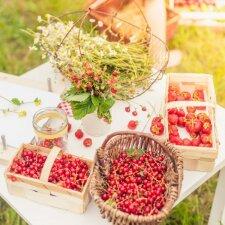 Piknikas su vaikais gamtoje – ką valgyti ir ko vengti?