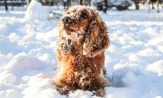 Augintinio priežiūra žiemą