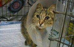 Dėkoja už pagalbą katytei Armitai, bet dabar jai reikia namų