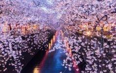 """Andriaus Kleivos """"Kaip veikia Japonija"""" – pažvelkite japonams į akis"""