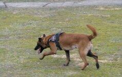 Застрелившего служебную собаку Комскиса выпустили из арестантской
