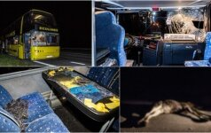 Под Вильнюсом туристический автобус столкнулся с лосем