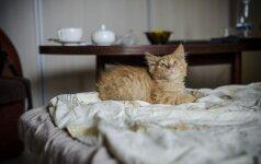 """Nuo """"ūkiško susidorojimo išgelbėti keturi kačiukai ieško namų!"""