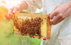 Poilsis gamtoje: kaip saugotis nuo bičių, širšių ir vapsvų