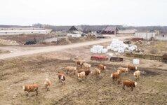 Литовское село. Родители умерли, дети приезжают только на озеро