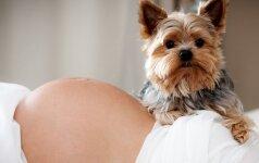 Naminiai gyvūnai: ar saugu nėščiajai ir gimus kūdikiui