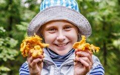 Duoti ar neduoti valgyti grybų vaikams?