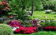 Japoniškas sodas ir 5 svarbiausi jo elementai