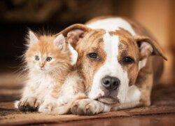 Kaip bendravimas su gyvūnais gali veikti jūsų sveikatą