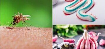 Kaip saugotis nuo uodų be sintetinių repelentų: 7 priemonės, kurios yra visuose namuose