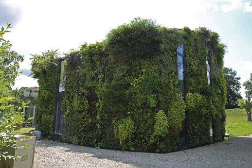 Pasaulyje garsaus botaniko darbus įkvėpė kabantys Babilono sodai