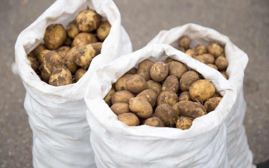 Naktiniame ūkininkų turguje jau gausu lietuviškų gėrybių