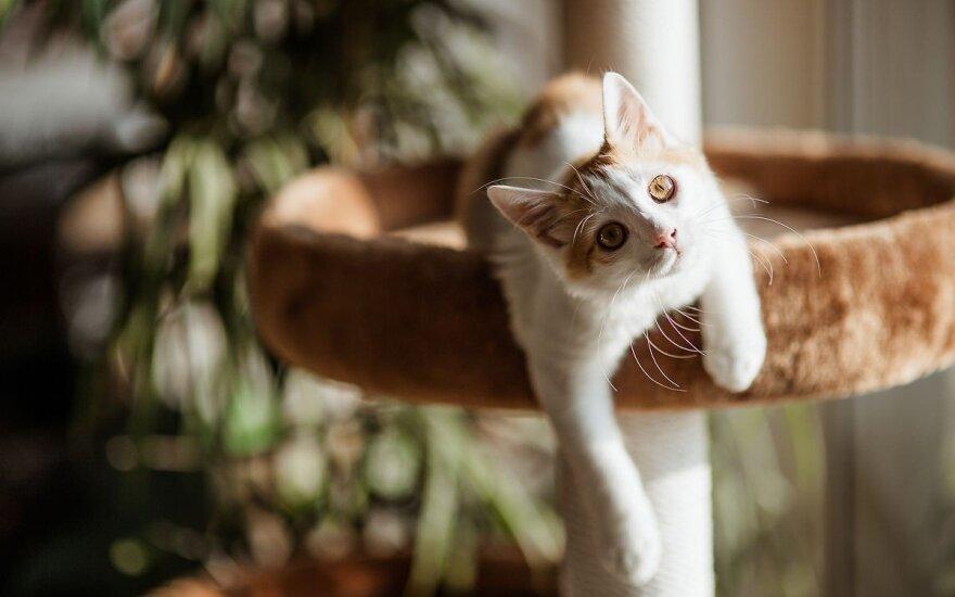 Деревня в Новой Зеландии решила избавиться от котов. За что?