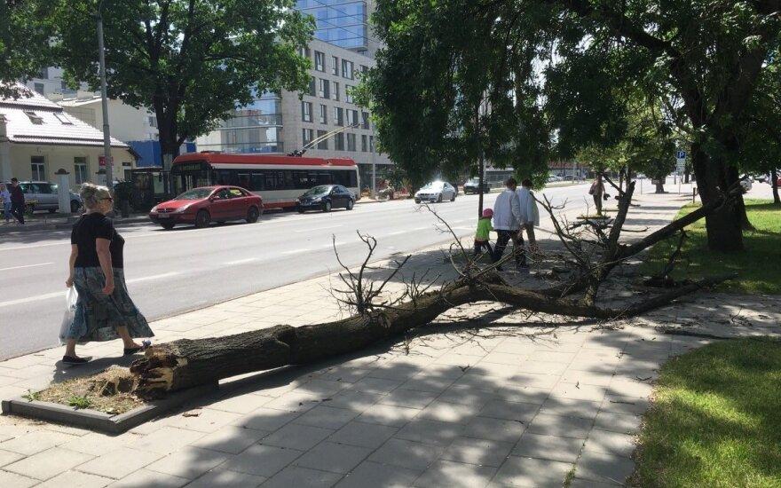 В Вильнюсе поваленное ветром дерево упало на женщину