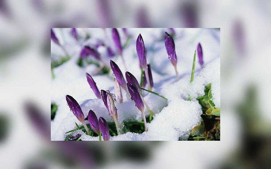 В субботу наступает астрономическая весна