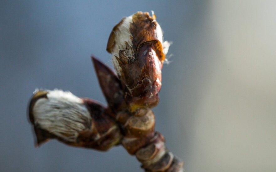 Наступил первый день весны: какие изменения наблюдаются в природе