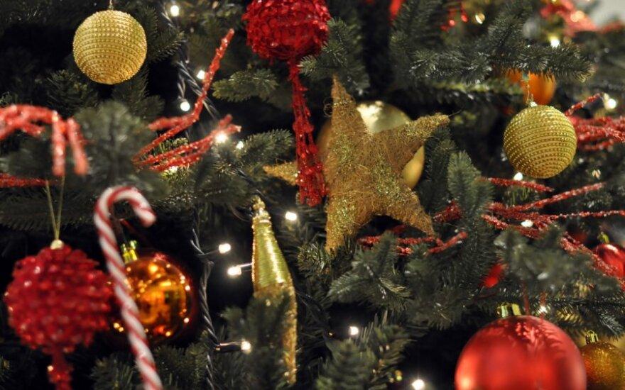 В города Литвы прибывают рождественские елки