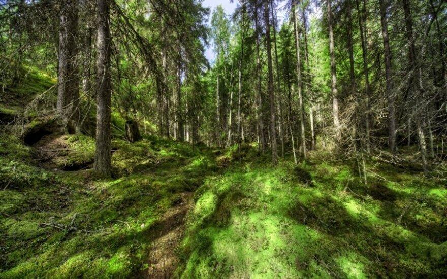Работа у литовских работодателей в финских лесах - зарплата 2500 евро