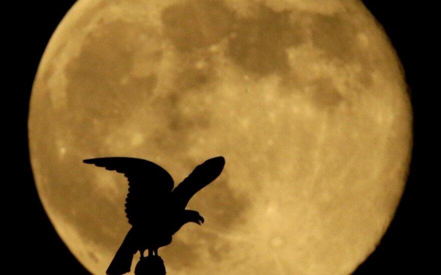 """""""Nefrytowy Zając"""" wylądował na Księżycu"""