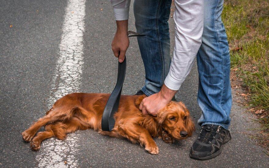Skriaudžiamas šuo