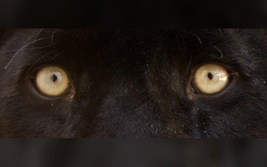 В подмосковном зверинце пантера насмерть загрызла человека