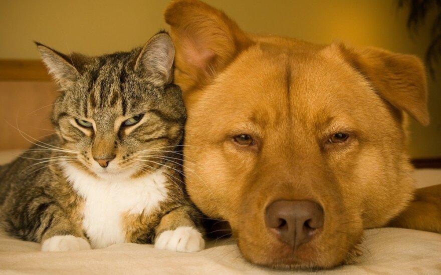 Katinas ir šuo