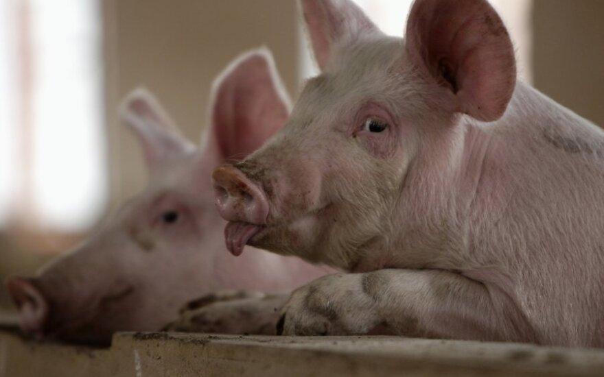 Если РФ станет членом ВТО, литовских свиней будет легче вывозить, а газ дешевле не станет
