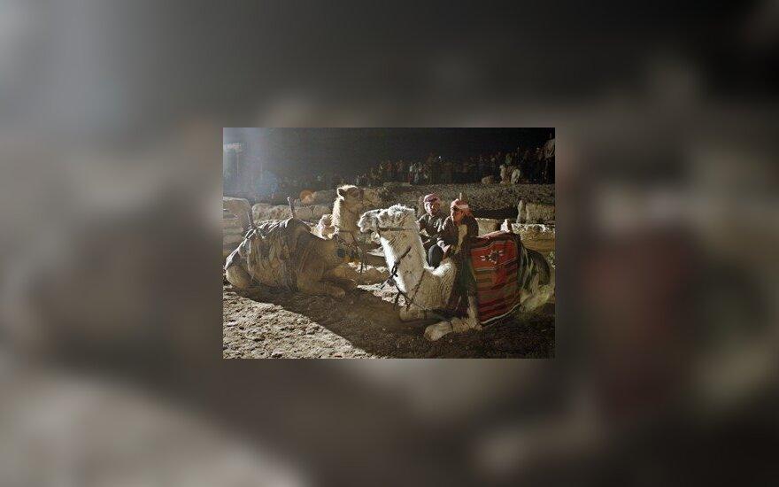 Sirijos beduinai ir jų kupranugariai ilsisi.