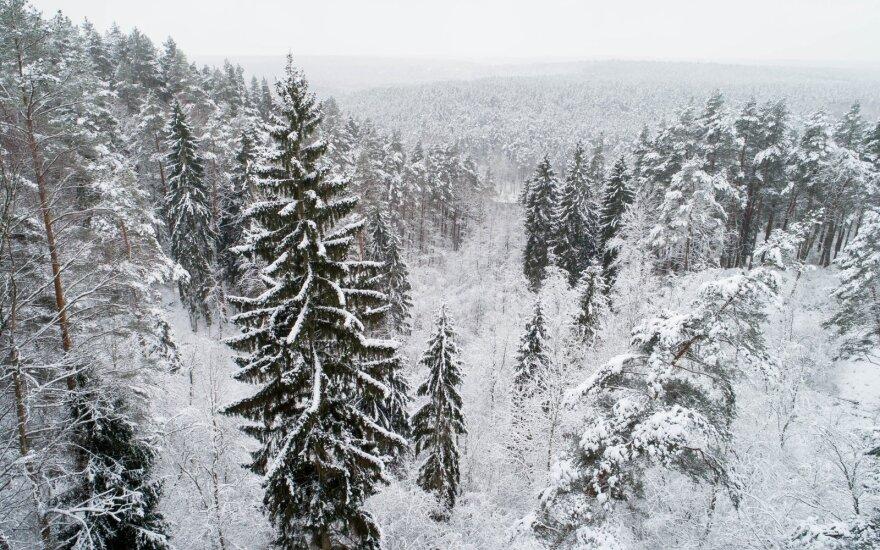 Прогноз погоды на Рождество: возможно, выпадет снег