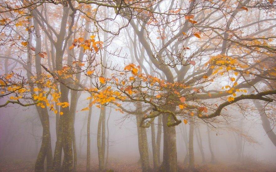 Какую погоду обещают синоптики в октябре