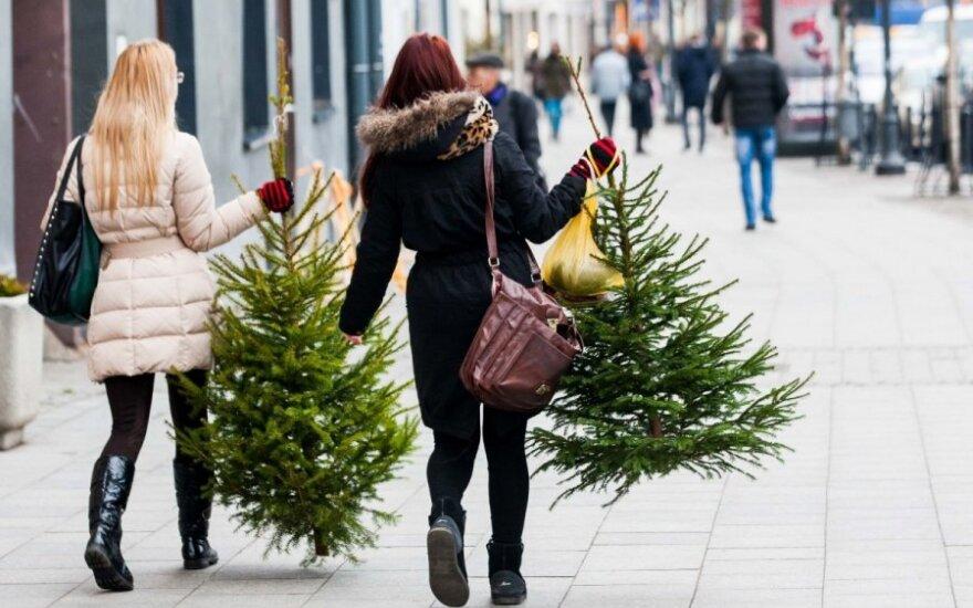 Jak kupić drzewko choinkowe i długo się nim cieszyć?
