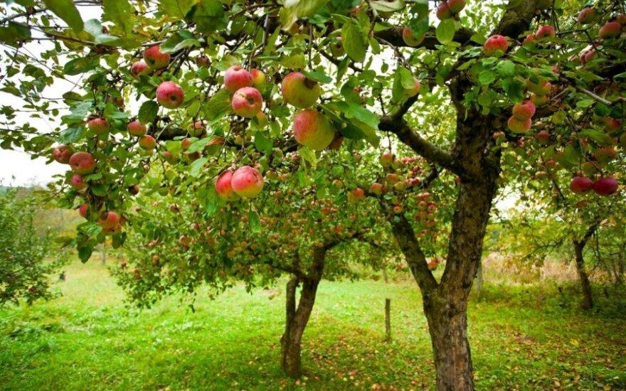 Z powodu embarga spada zatrudnienie przy pracach sezonowych w rolnictwie