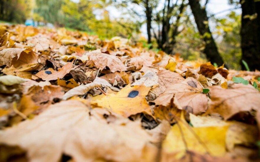 Už netinkamoje vietoje paliktus lapus Panevėžyje gresia iki 2000 litų bauda
