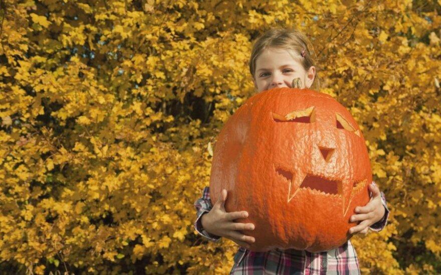 Dynie przydatne nie tylko na Halloween