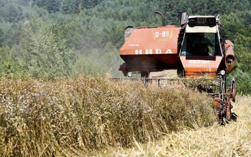 Цены на рынке диктует Россия: литовское зерно подешевело
