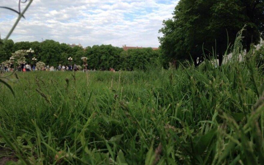 Ilga žolė Lukiškių aikštėje