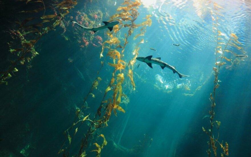 Kolonizacja oceanów rozpoczęta