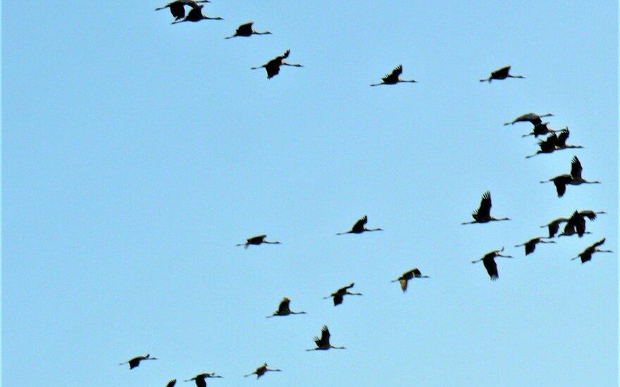 Pasaulinė paukščių diena