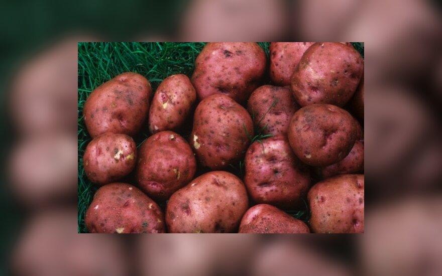 России угрожает еще и дефицит картофеля
