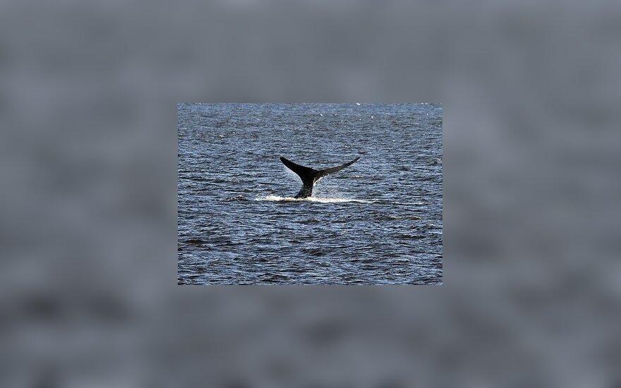 В Рижском заливе рыбаки заметили кита