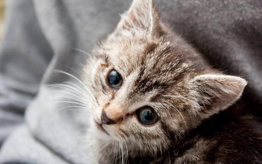 Школьниц, убивших котенка топором в Алтайском крае, поставили на учет
