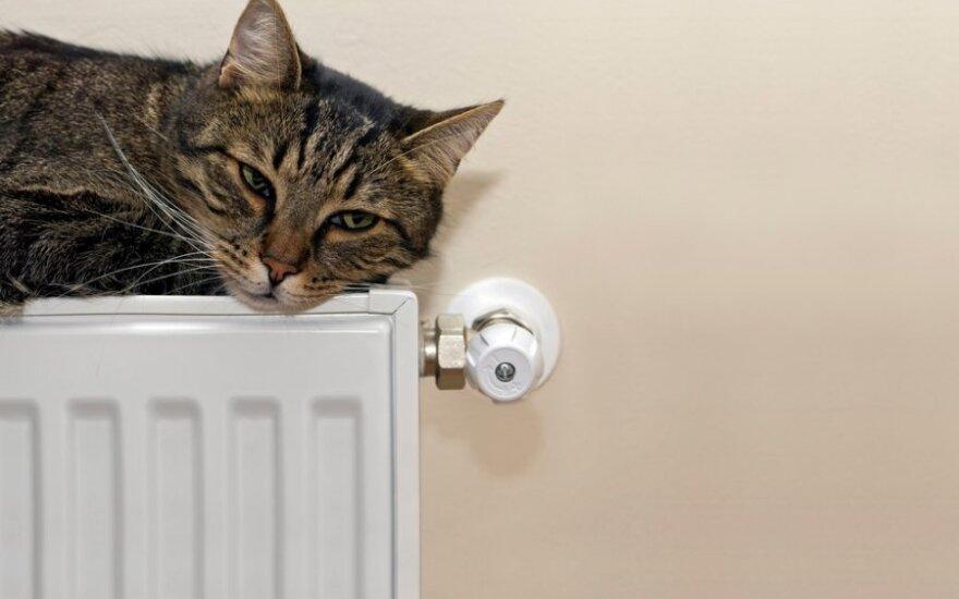 Besišildantis katinas