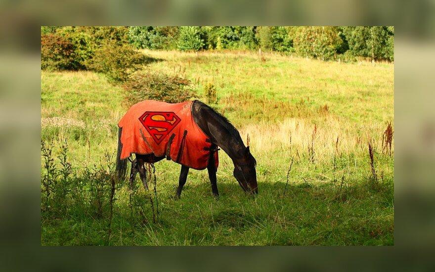 Žirgas su raudonu apsiaustu sergėju Lietuvos ramybę