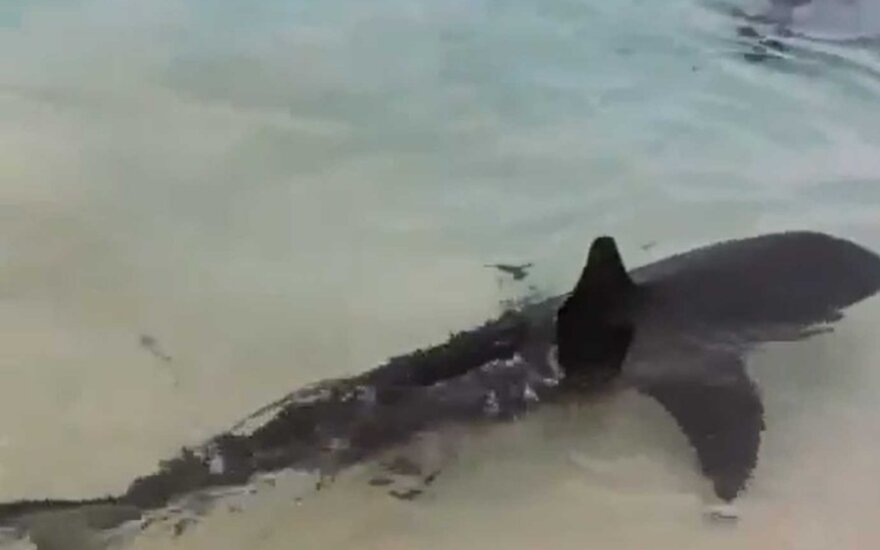Ryklys