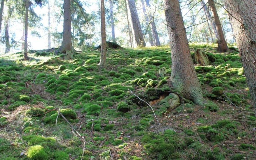 Пропавший в Радвилишкском районе мужчина двое суток прожил в лесу