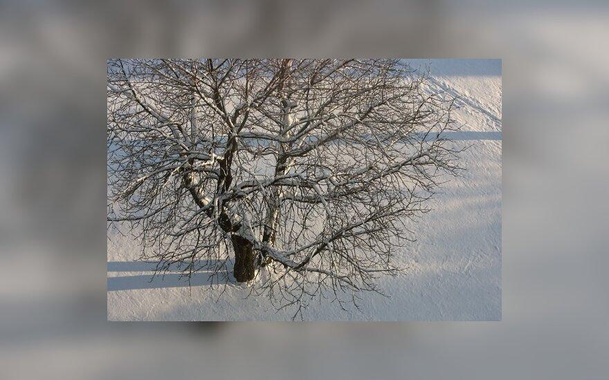 В Эстонии похолодало до минус 25