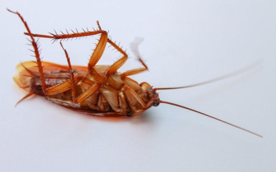 """""""Не выполнил плана - ешь таракана"""". Как в Китае наказывают офисных сотрудников"""