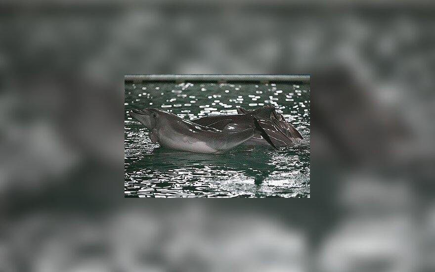 На атлантическое побережье США выбросилось рекордное число дельфинов